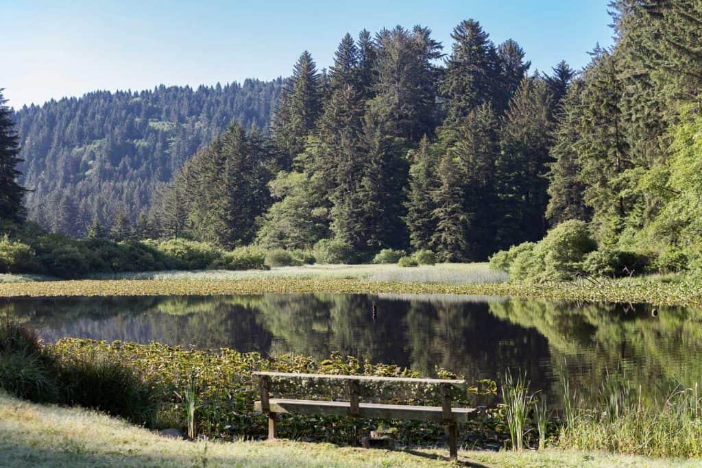 Hwy 101 - Del Norte Coast Redwoods State Park